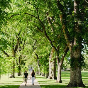 Students walk through the Oval on the CSU campus.