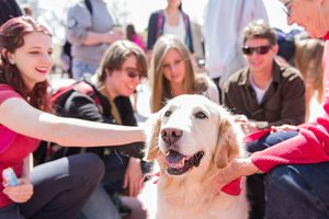 How to get your pet fix in college