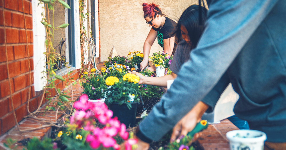 students plant ornamental plants in an outdoor flowerbed