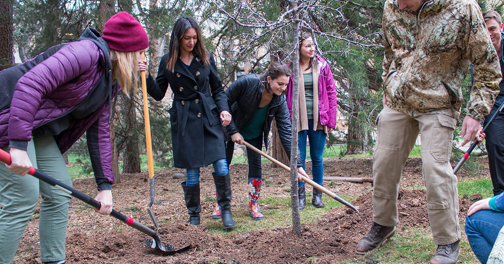 A group of students use shovels to cover an area around a newly planted tree with dirt.