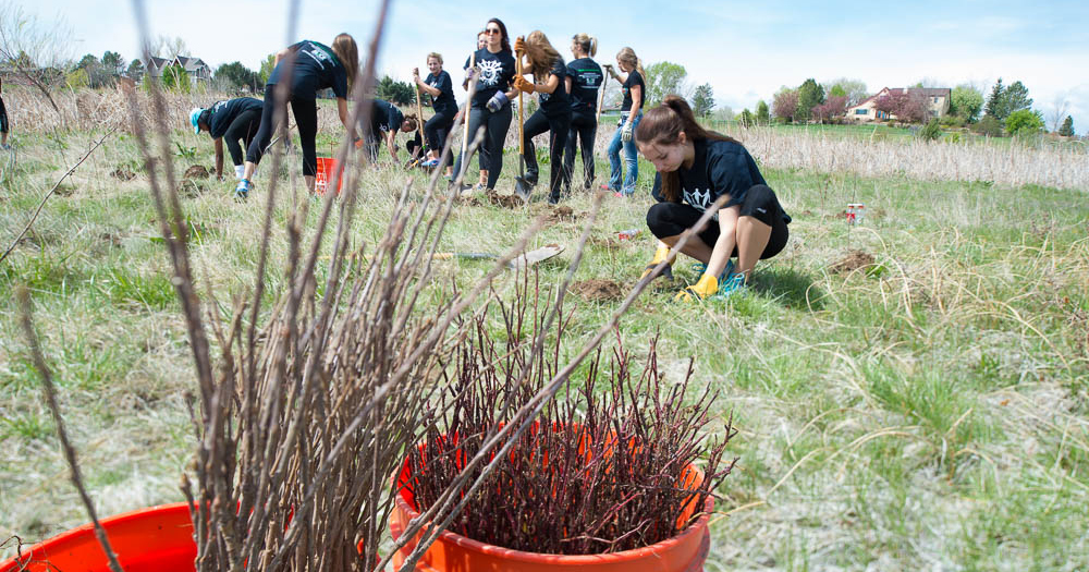 Students planting shrubs