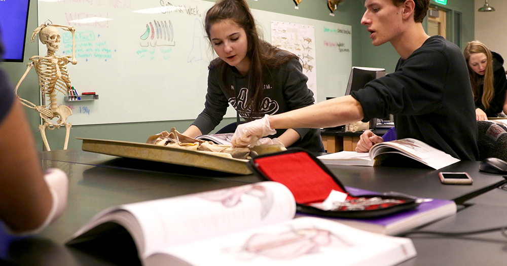 students work in a dissection lab